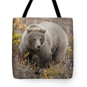 Grizzly Amongst Fall Foliage In Denali Tote Bag