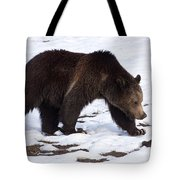 Grizzly Bear  #2463 Tote Bag
