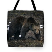 Grizzly Bear  #2510 Tote Bag