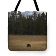 Grizzly Bear  #5245 Tote Bag