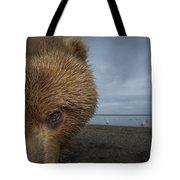 Grizzly Bear In Tidal Flats Alaska Tote Bag