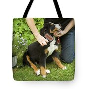 Grooming Bernese Mountain Puppy Tote Bag