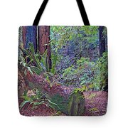 Ground Level Landscape In Armstrong Redwoods State Preserve Near Guerneville-ca Tote Bag