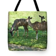 group of Kudu Antelope Tote Bag