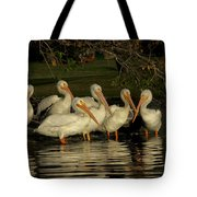Group Of White Pelicans Tote Bag