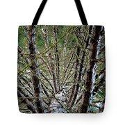 Growing Pine Tote Bag