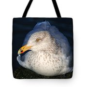Gull Resting Tote Bag