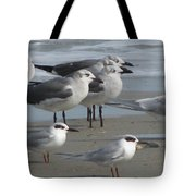 Gulls And Terns Tote Bag
