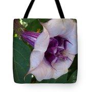 Gypsy Ballerina Tote Bag