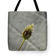 Hairy Plant Seed Pod 1 Tote Bag