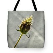 Hairy Plant Seed Pod 3 Tote Bag