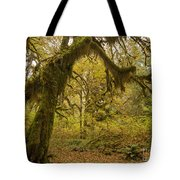 Hall Of Mosses 5 Tote Bag