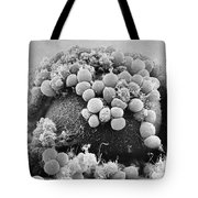 Hamster Egg And Cumulus Cells Sem Tote Bag