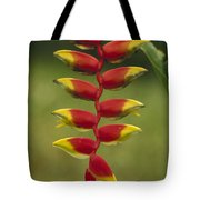 Hanging Heliconia Blooming In Rainforest Tote Bag