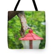 Hanging Squirrel Tote Bag