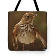 Happy Hermit Thrush Tote Bag