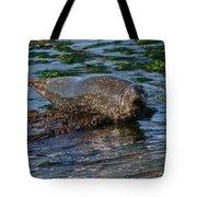 Harbor Seal At Low Tide Tote Bag