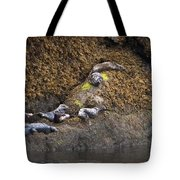 Harbor Seals Tote Bag