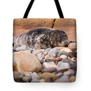 Harbour Seal   Tote Bag