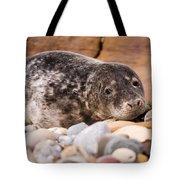 Harbour Seal Close Up Tote Bag