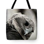 Harpy Eagle Closeup Tote Bag