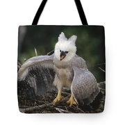 Harpy Eagle Threat Posture Amazonian Tote Bag