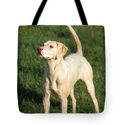 Harrier Dog Tote Bag
