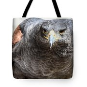 Harris Hawk Ready For Attack Tote Bag
