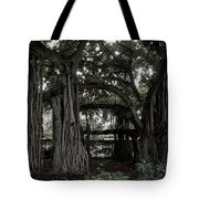 Hawaiian Banyan Trees Tote Bag by Daniel Hagerman