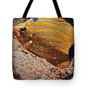 Hawaiian Butterfly Fish Tote Bag