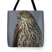 Hawk Beauty On The Lookout Tote Bag