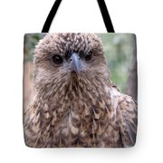 Brown Hawk Face Profile Tote Bag