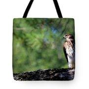 Hawk In Tree Tote Bag