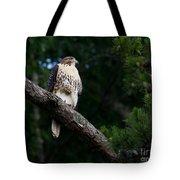 Hawk On Norris Lake Tote Bag