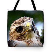 Hawk - Raptor - Living The Good Life Tote Bag