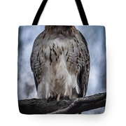 Hawk Red Tailed Tote Bag