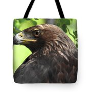 Hawk Scouting Tote Bag