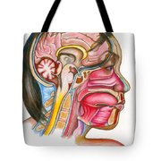 Head And Neck Anatomy Tote Bag