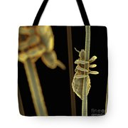 Head Lice Tote Bag