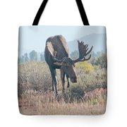 Head Lowered Bull Moose Tote Bag