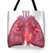 Heart Illustration, With Pulmonary Veins Tote Bag