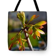 Helicopter Seeds 2 Tote Bag