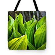 Hellebore And Aspens Tote Bag