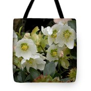 Hellebore And Friends Tote Bag