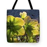 Helleborus Backlight Blossoms 2 Tote Bag