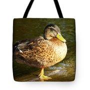 Hen Mallard Duck Tote Bag