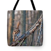 Hen Ruffed Grouse On Roost Tote Bag
