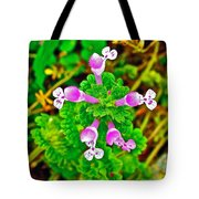 Henbit At Chickasaw Village Site At Mile 262 Of Natchez Trace Parkway-mississippi Tote Bag