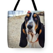 Henry The Basset Tote Bag