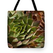 Hens And Chicks Sedum 1 Tote Bag
